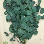 Shower Flower Green - Top 5 Online