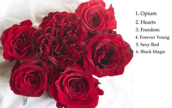 Vao Rosas - Top 5 On line 2